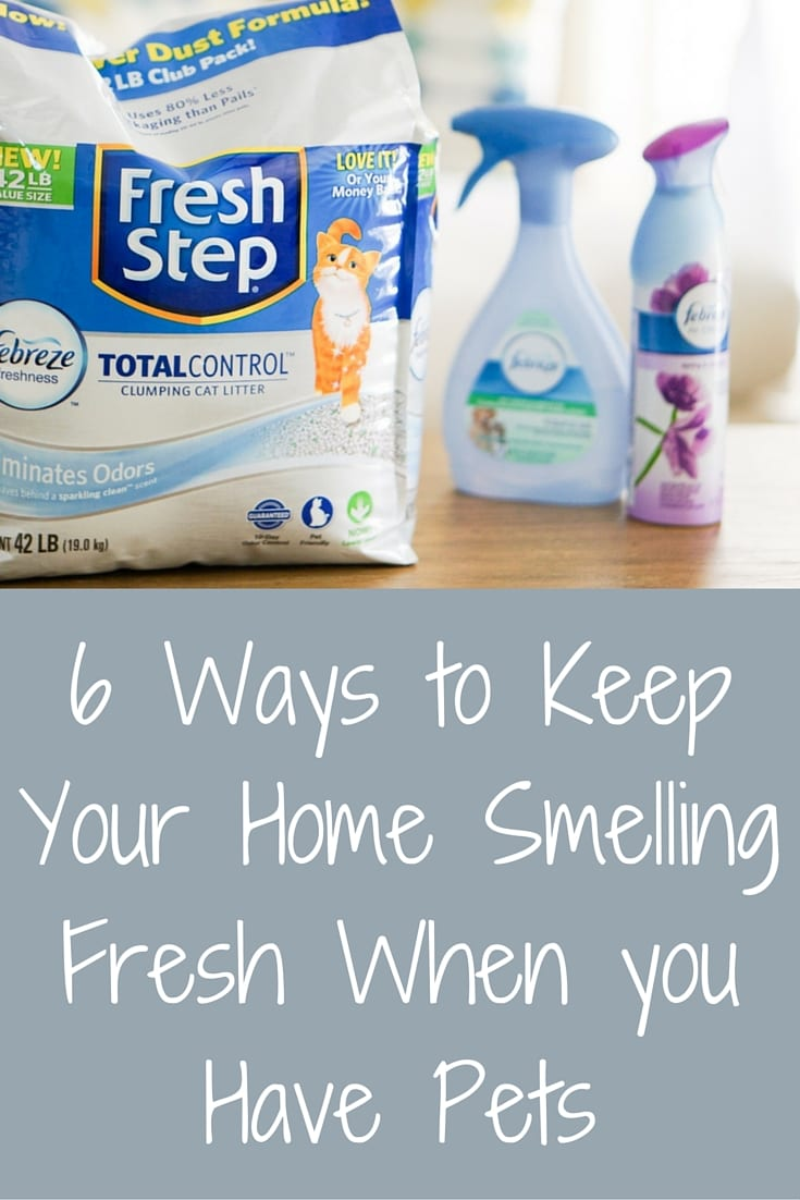 6 Ways to Keep Your Home Smelling Fresh When you Have Pets