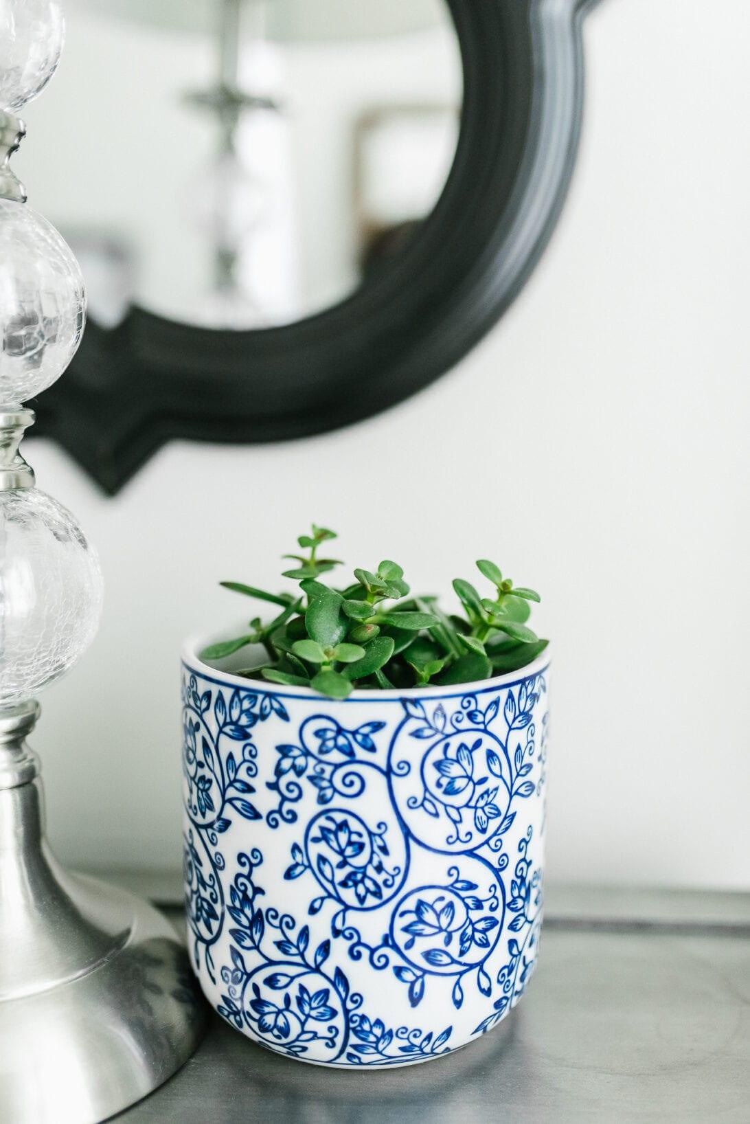 house plants, master bedroom