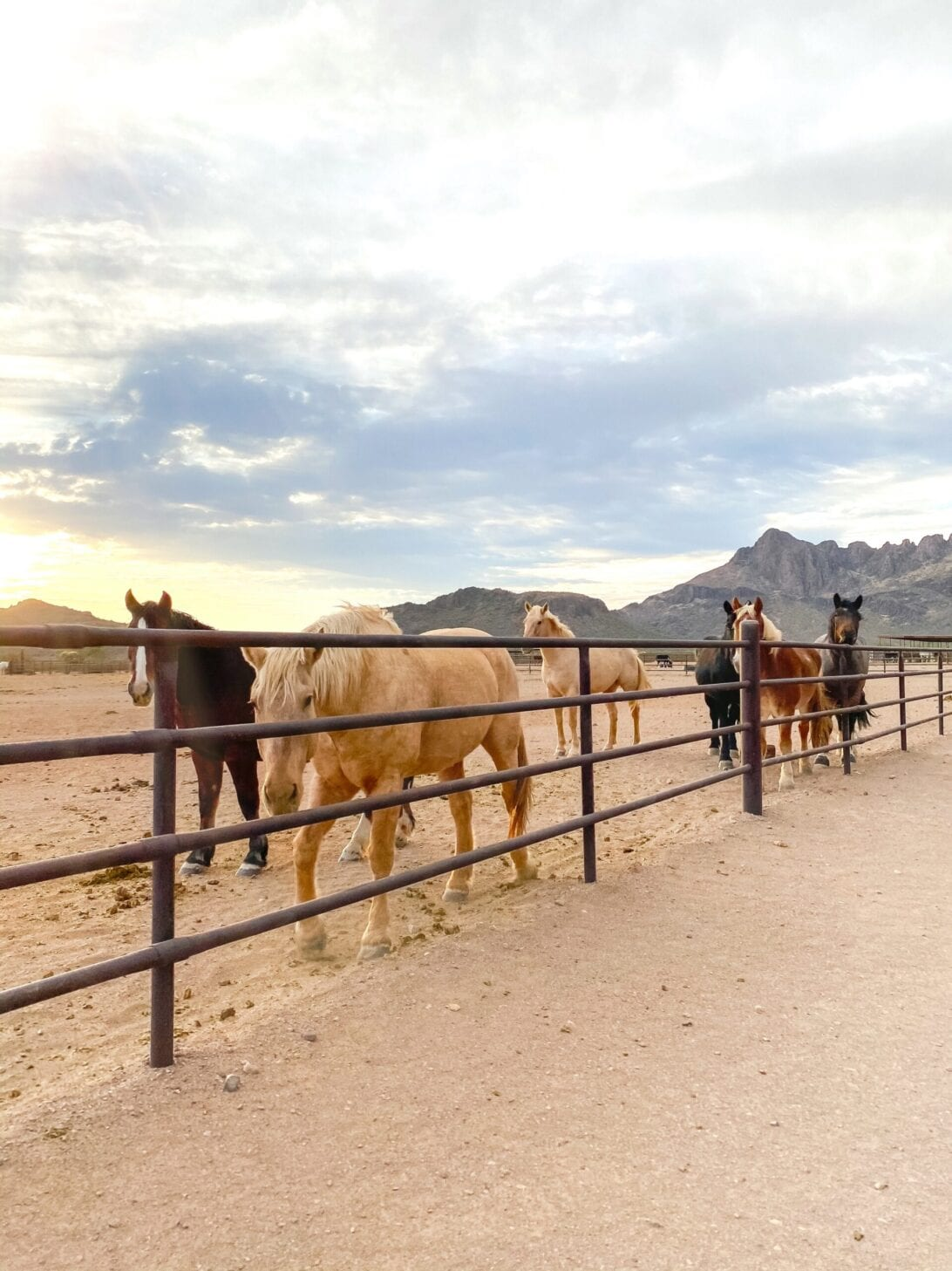dude ranch, horses, Arizona, White Stallion Ranch